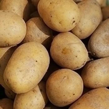 Kartoffeln festkochend Glorietta - lose
